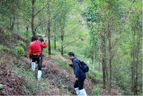2低产林调查_看图王.jpg